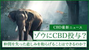 仲間を失った悲しみに明け暮れているゾウにCBDが投与される。その効果とは?